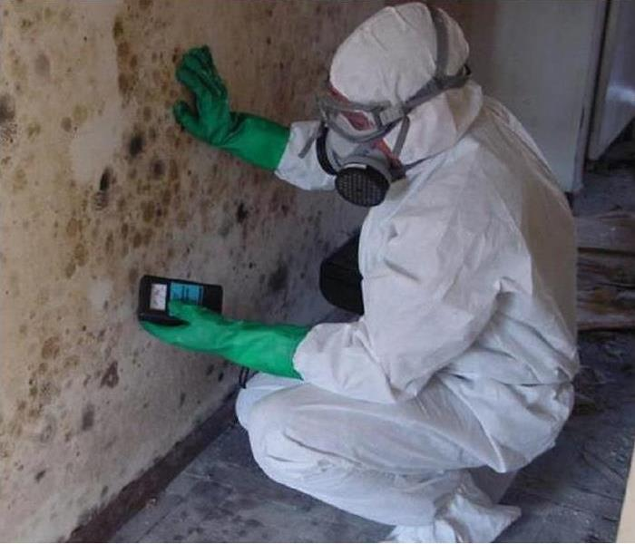Mold Remediation Two Important Reasons to do a Mold Inspection