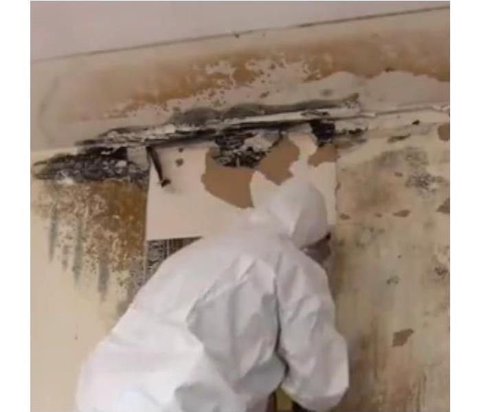 Mold Remediation Mold Removal Experts: SERVPRO of NE Albuquerque